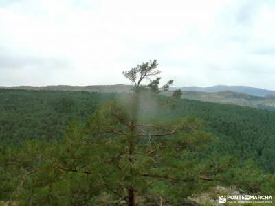 Canencia-Mojonavalle-Sestil de Maillo;la pedriza charca verde excursiones cerca de madrid con niños